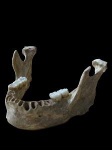 Los humanos modernos y los neandertales estuvieron emparentados