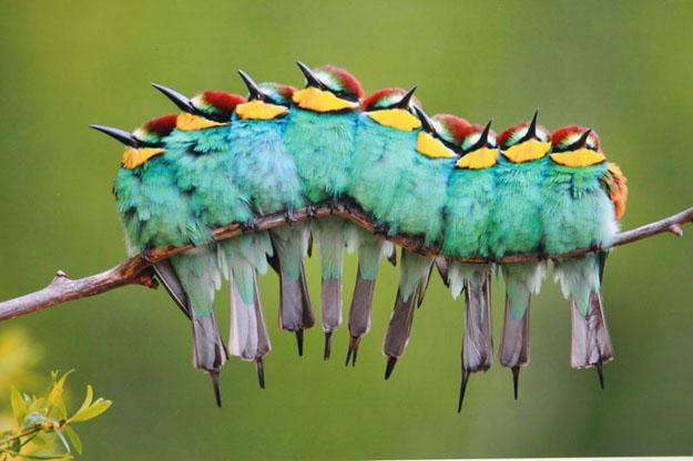 Estudio eleva a 18.000 las especies de aves, 7.000 más de las conocidas - familia-de-pajaros-arbol