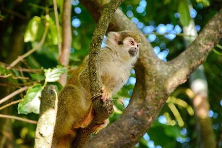 Así arrasa la sociedad de consumo con la biodiversidad del planeta - mono