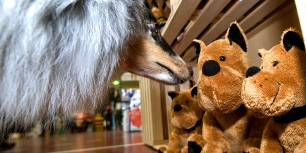 """Portugal modifica su código civil para que los animales dejen de ser """"cosas"""" - th_1cce678baa2865fe866ba90e481edd63_perro-peluches-archivo-Efeverde"""