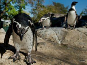 Chile rechaza por riesgo ambiental un millonario proyecto minero - cfdc4fdb13cc0c252daf2b99aa50c5d3e0f445d0-300x225