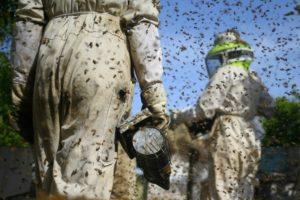 Insecticida que contaminó huevos en la UE mata a miles de colmenas en Uruguay - 3511a23b6ada54df73622e6ebb98f2fa473a5091-300x200