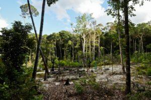 Greenpeace detecta minería ilegal en una reserva amazónica en Brasil - 44784ad78a96585f95ac4cb6d1db07f488338695-300x200