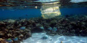 El ser humano ha convertido el mar en un basurero, afirma la presidenta de WWF - th_1cce678baa2865fe866ba90e481edd63_2707961-e1465378261358-300x150