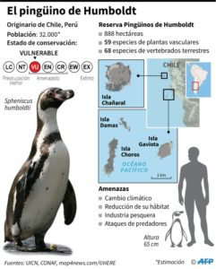 Minería versus pingüinos, la batalla que divide en Chile - 1760fb01c4c24508cddb9e6f47e72fc1581a3b69-241x300