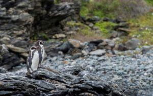 Minería versus pingüinos, la batalla que divide en Chile - bde55ead801ad41137a56f17bc88c809649141e3-300x188