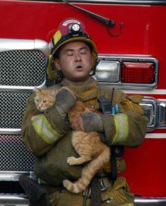 PACMA presenta un plan para la evacuación de animales ante catástrofes - animales-desastres-incendio-gato--242x300