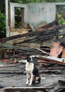 PACMA presenta un plan para la evacuación de animales ante catástrofes - desastres-perro--213x300