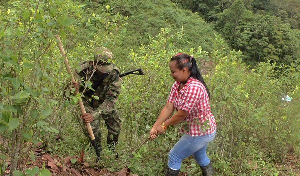 Análisis La agonía del campesino cocalero en Colombia - result_93_