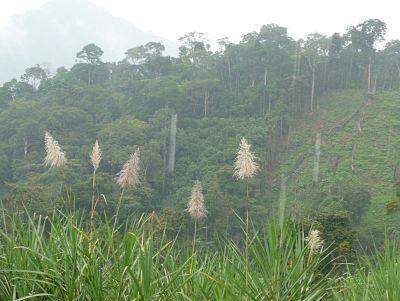 Se discute en el Congreso el futuro de las Zonas de Reserva Forestal del país - resultqwtryipo