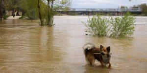 PACMA presenta un plan para la evacuación de animales ante catástrofes - th_1cce678baa2865fe866ba90e481edd63_desastres-animales-perro-300x150