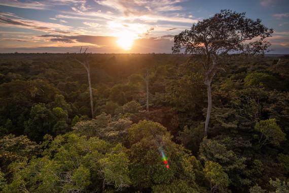 El Amazonas boliviano, hacia la deforestación - El-Amazonas-boliviano-hacia-la-deforestacion_image_380