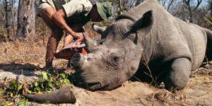 España ya tiene su primer plan contra el trafico ilegal de especies - th_1cce678baa2865fe866ba90e481edd63_rinoceronte22-300x150