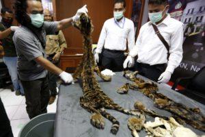 España ya tiene su primer plan contra el trafico ilegal de especies - tráfico-animales-2-300x200